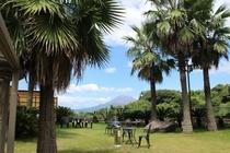 【桜島】天気の良い日はくっきり見えますよ。