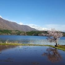 春の風景 青木湖