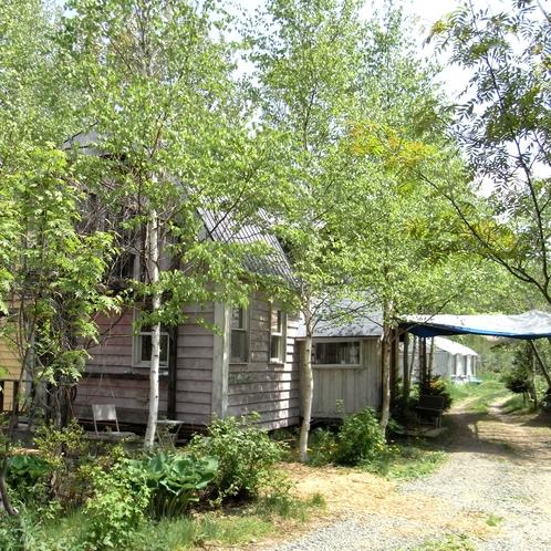 木立に囲まれた一軒家です。