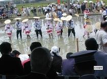 お田植祭(日本三大)