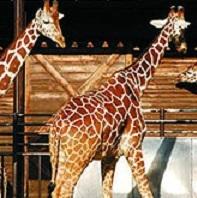 媛県立とべ動物園(ホテルよりお車で約34分)