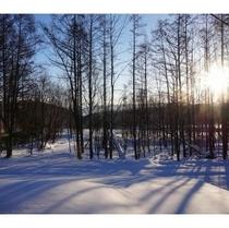冬のこもれ日
