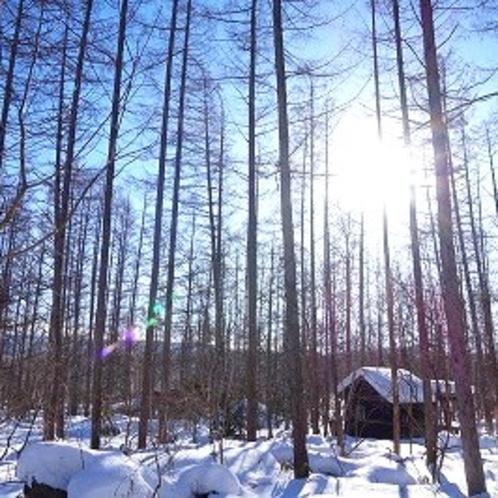 冬の木漏れ日…