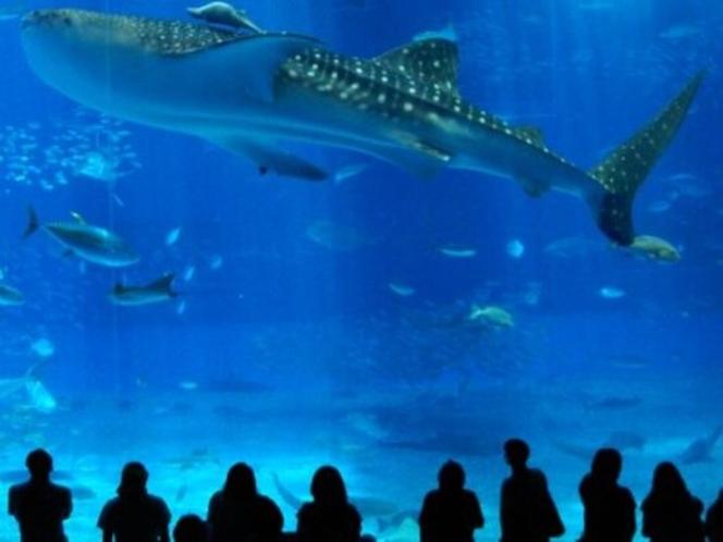 大人気の美ら海水族館【車で約50分】