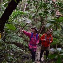 マリユドゥ&カンピレーの滝へ ジャングルを歩こう