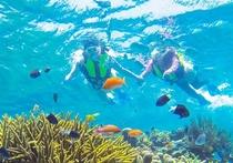 珊瑚礁シュノーケル(イメージ)