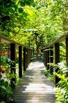 ジャングルブックカフェ入り口