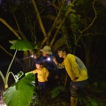 夜のジャングル探検