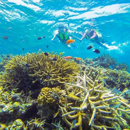 珊瑚礁シュノーケリング