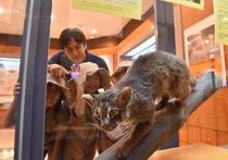 野生動物保護センター