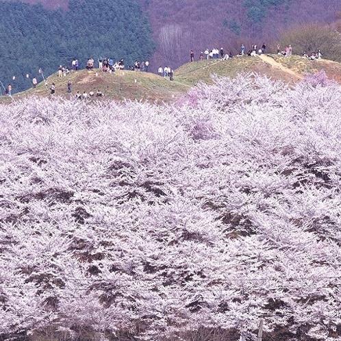 ◇弘法山古墳<アクセス:車で約19分>桜が有名