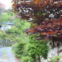 ◇庭園ではいつの季節にきても楽しめる木々や花が植えられています。