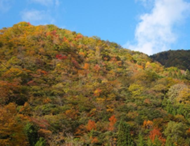 色づく秋の福地山(10月20日撮影)