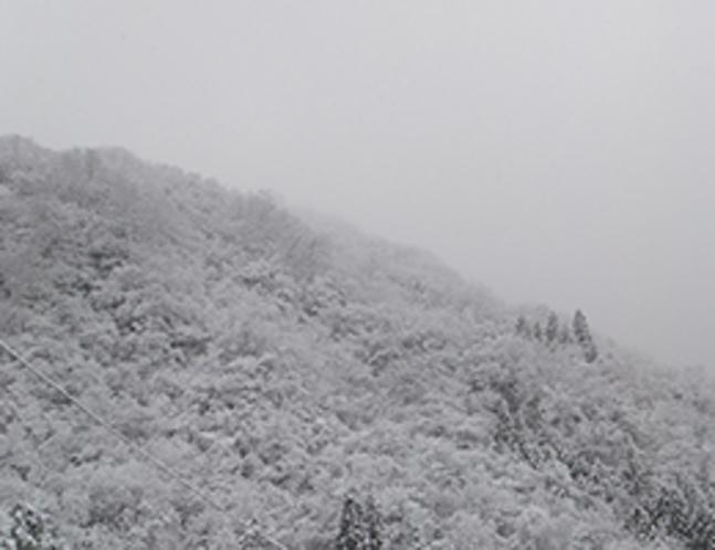冬のはじまりの福地山(玄関前から11月撮影)