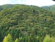 夏みどり濃い福地山