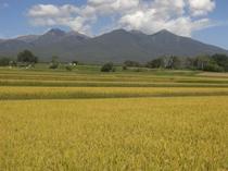 秋、稲刈りの季節