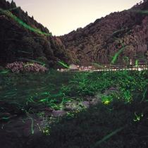 丹波篠山地域で、ホタルが見られるのは、6月初旬から7月初旬にかけて。