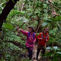 朝のジャングルリフレッシュ02
