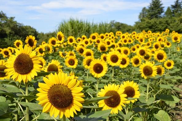 【ショートトリップ】花と緑のパラダイス「国営昭和記念公園」へ行ってみよう♪