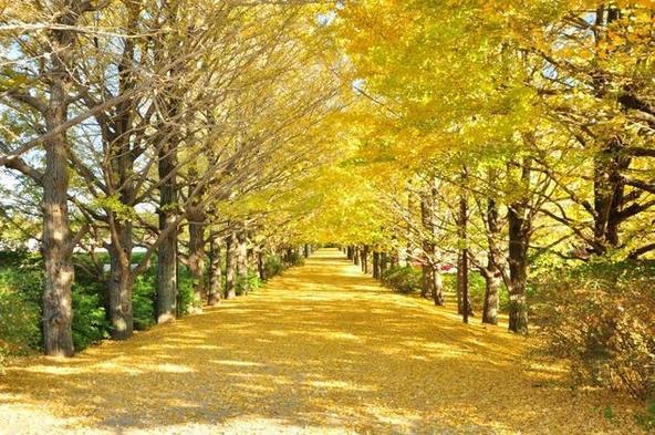 【ショートトリップ】花と緑のパラダイス「国営昭和記念公園」へ行ってみよう♪ 【首都圏おすすめ】