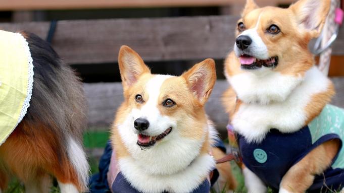 【ペット旅応援】愛犬と栂池高原を満喫♪シャワーブース完備◇日替り料理【2食付】《感染症予防対策強化》