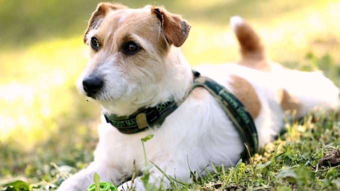 【ペット旅応援】《素泊り》愛犬と栂池高原を満喫♪男女シャワーブース・Wi-Fi完備《感染症予防強化》