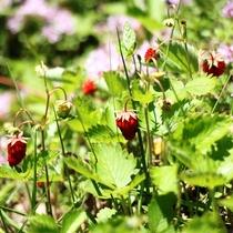 【周辺】季節の草花。