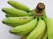 沖縄の果実 島バナナ
