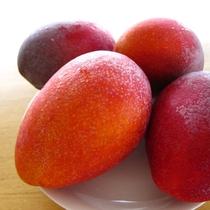 沖縄の果実 マンゴー