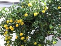 *自然に包まれた当館は 季節の木々に囲まれ 移ろいを楽しめます