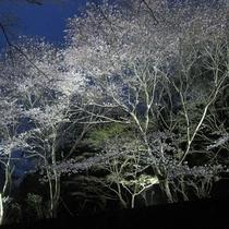【川口ダム周辺のさくら】もみじ川温泉から車で約5分程度。さくらの時期はライトアップする予定♪