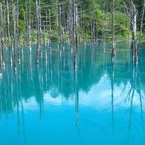 美瑛町・青い池