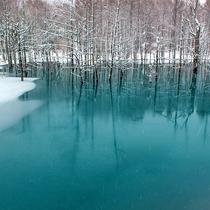 美瑛町・青い池 冬