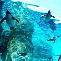 ペンギン[写真提供:旭山動物園]※「無断使用」及び「無駄転載」禁止