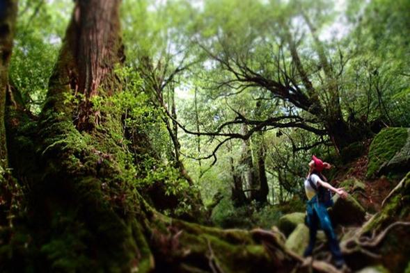 【いいね!Yakushima2泊3日】縄文杉+白谷雲水峡半日ガイド付き