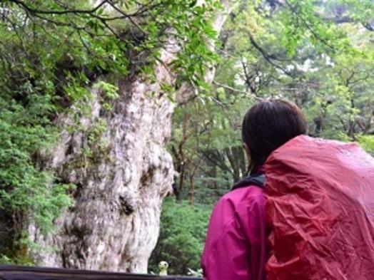 【いいね!Yakushima3泊4日】縄文杉+白谷1日(太鼓岩)ガイド付き