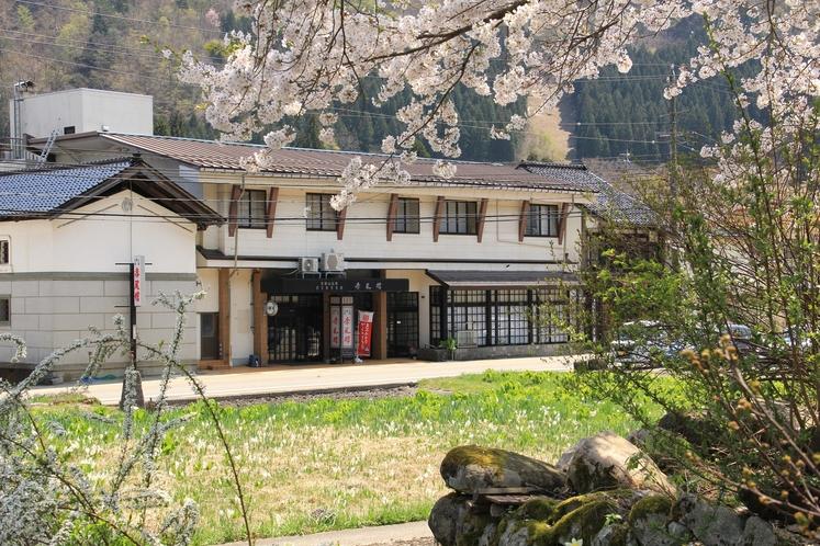 桜と赤尾館外観