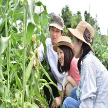 夏季限定の野菜収穫体験