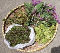 山菜 4種類(カタクリ ぜんまい 木の芽 ふきのとう
