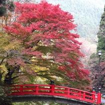 大寧寺の紅葉と虎渓橋