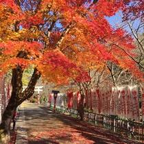大寧寺の参道にある紅葉