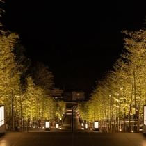 竹林の階段