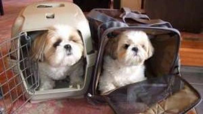 1泊2食付き【4室限定】ペットも旅行に連れてって〜!犬・猫ちゃん同宿プラン☆お食事も個室で一緒に♪