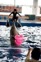 イルカランドのイルカのバルーンプレゼント!