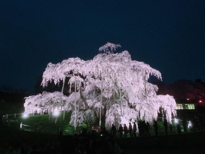 滝桜ライトアップ(三春町)