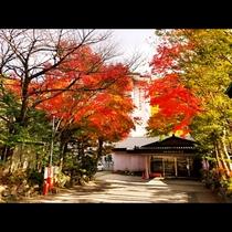 当館も秋は紅葉で真っ赤に染まります♪