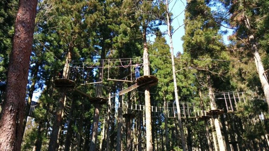 *【フォレスト・アドベンチャー】樹上8mの高さを空中散歩♪