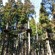 【フォレスト・アドベンチャー】樹上8mの高さを空中散歩♪