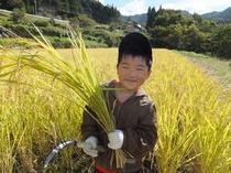 お米は「自家栽培のコシヒカリ」を使用しています。