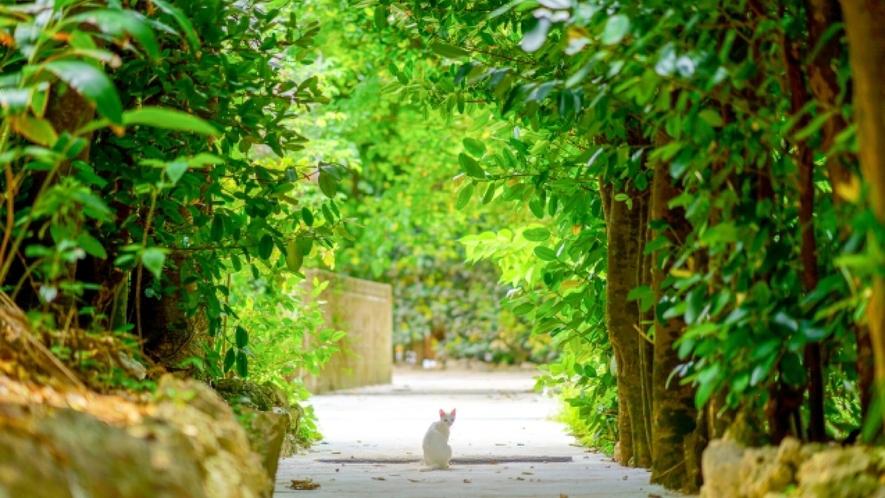緑のトンネルを散策。備瀬のフクギ並木まで車で5分!